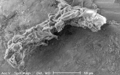 Valutazione del rischio amianto
